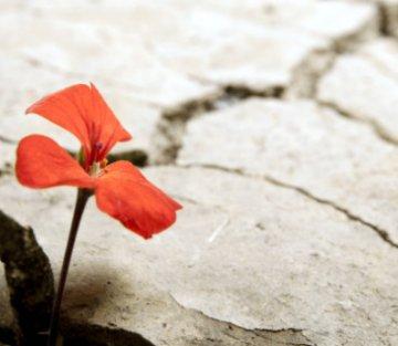 Being Resilient During Coronavirus