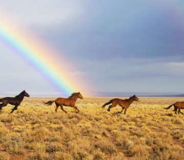 Where the Horses Sing