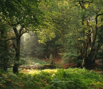 The Stillness of the Living Forest