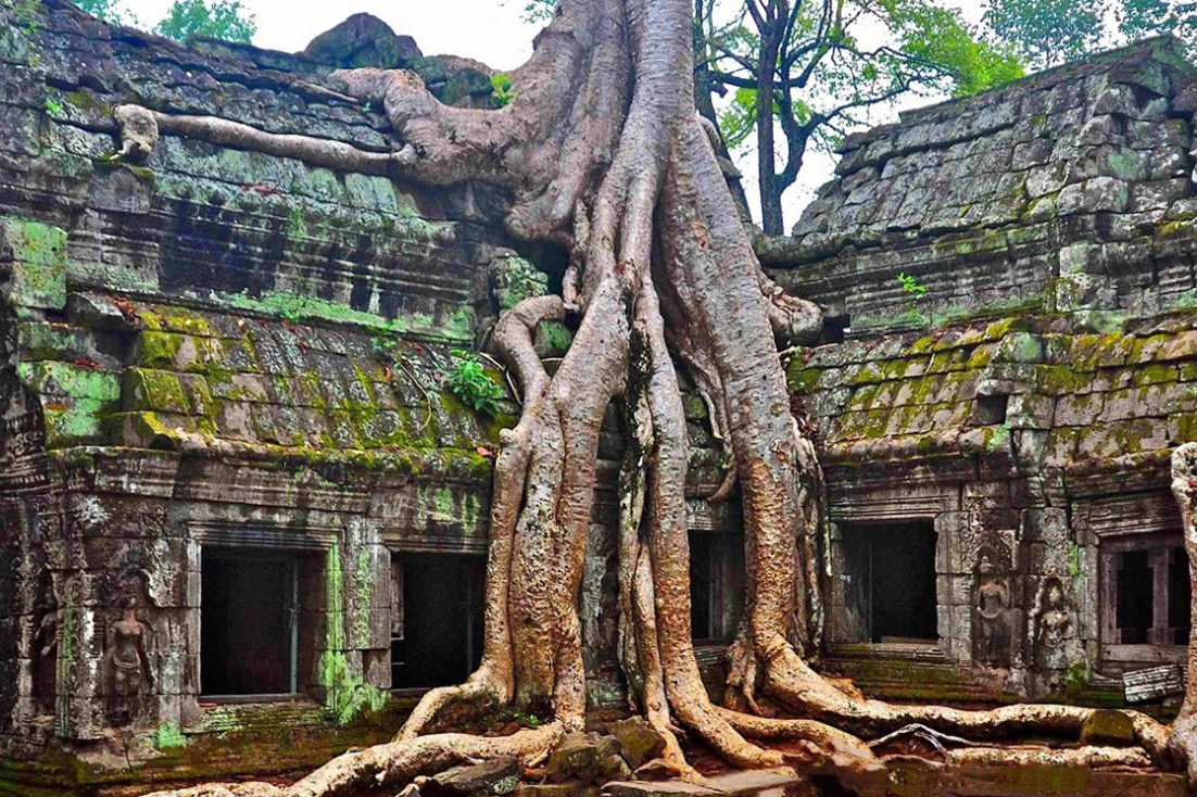 Tree growing upon ancient buildings at Ta Prohm