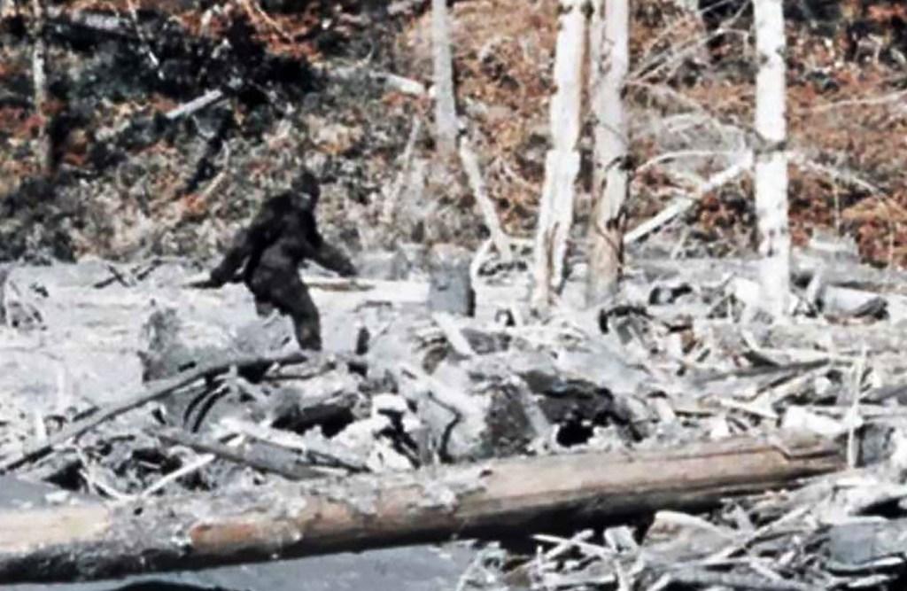 Patterson Gimlin Bigfoot