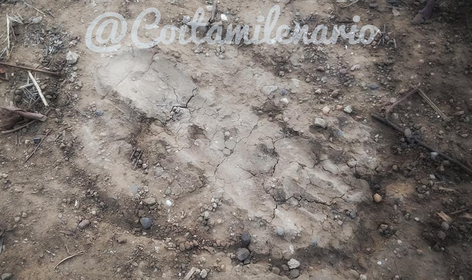 Coita werewolf footprints
