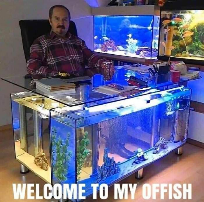 Welcome To My Offish