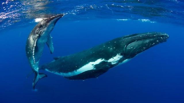 Celebrate World Whale Day