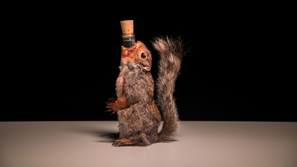 Beer in a Dead Squirrel? The Disgusting Food Museum Has it All