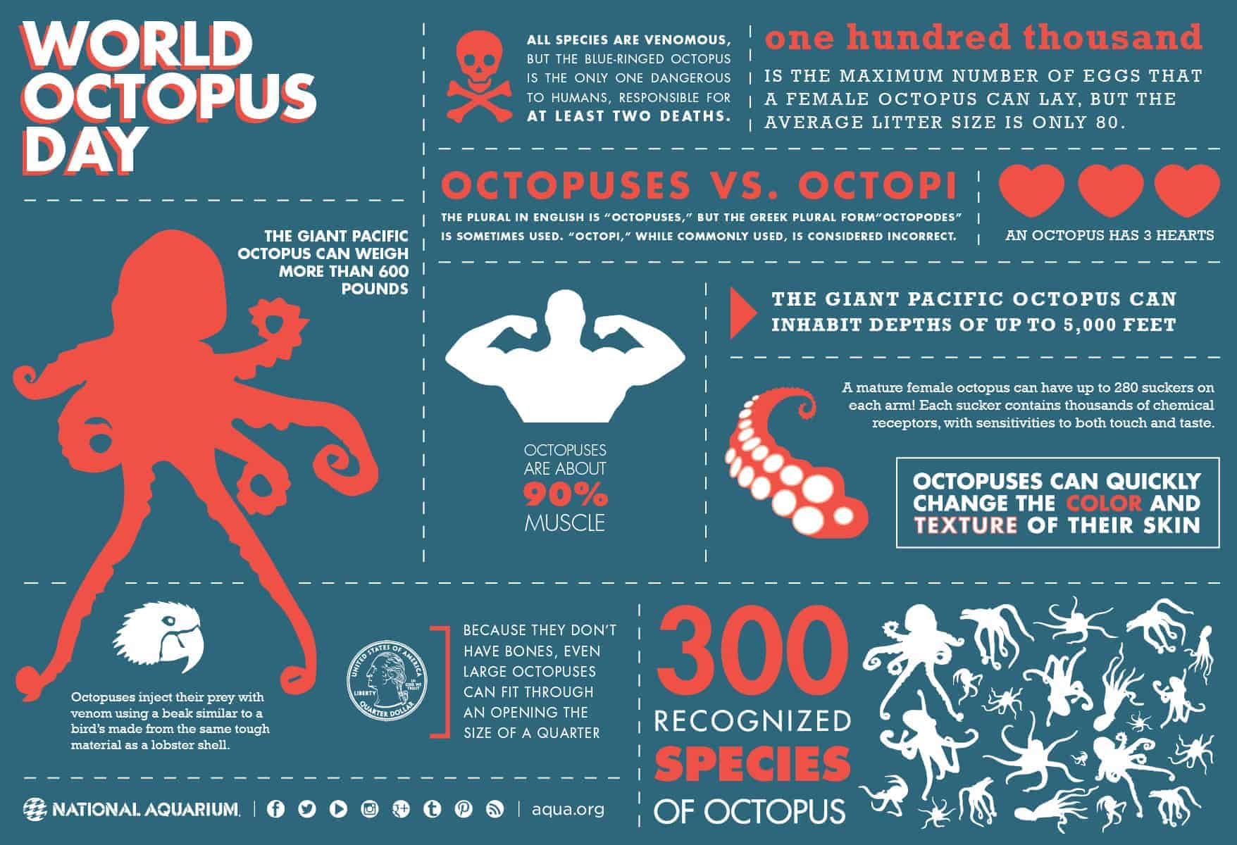 octopus water vascular system diagram sony home theater wiring world day daily infographic