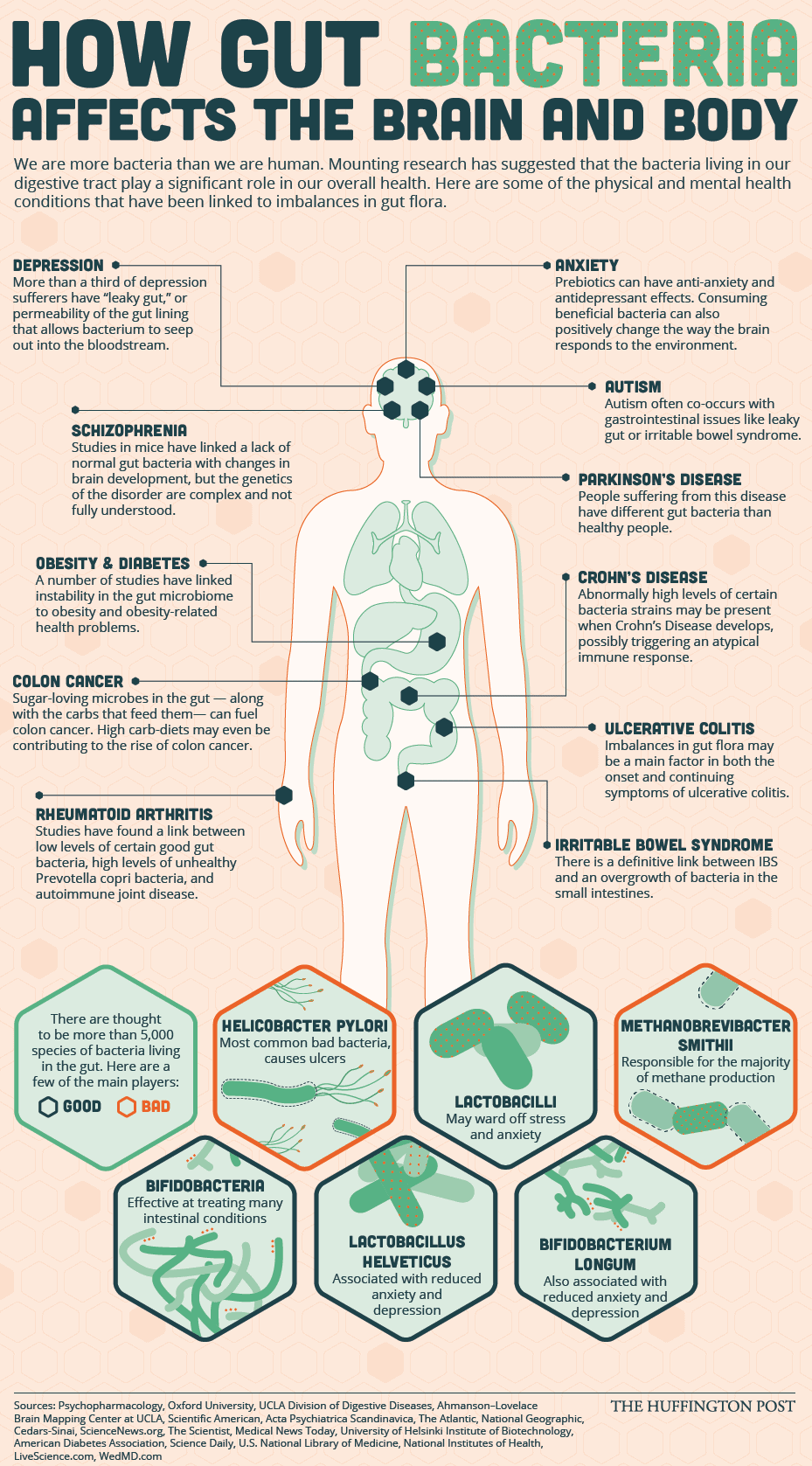 funny exercise diagram olefins process flow how gut bacteria affects the brain and body | daily infographic