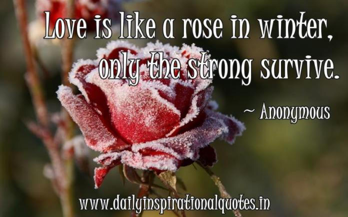 Love is like a rose in winter.. ( Love Quotes )