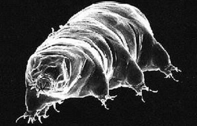 tardigraded