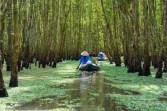 Vietnam_242141830