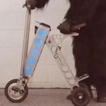 scooter-urb-e
