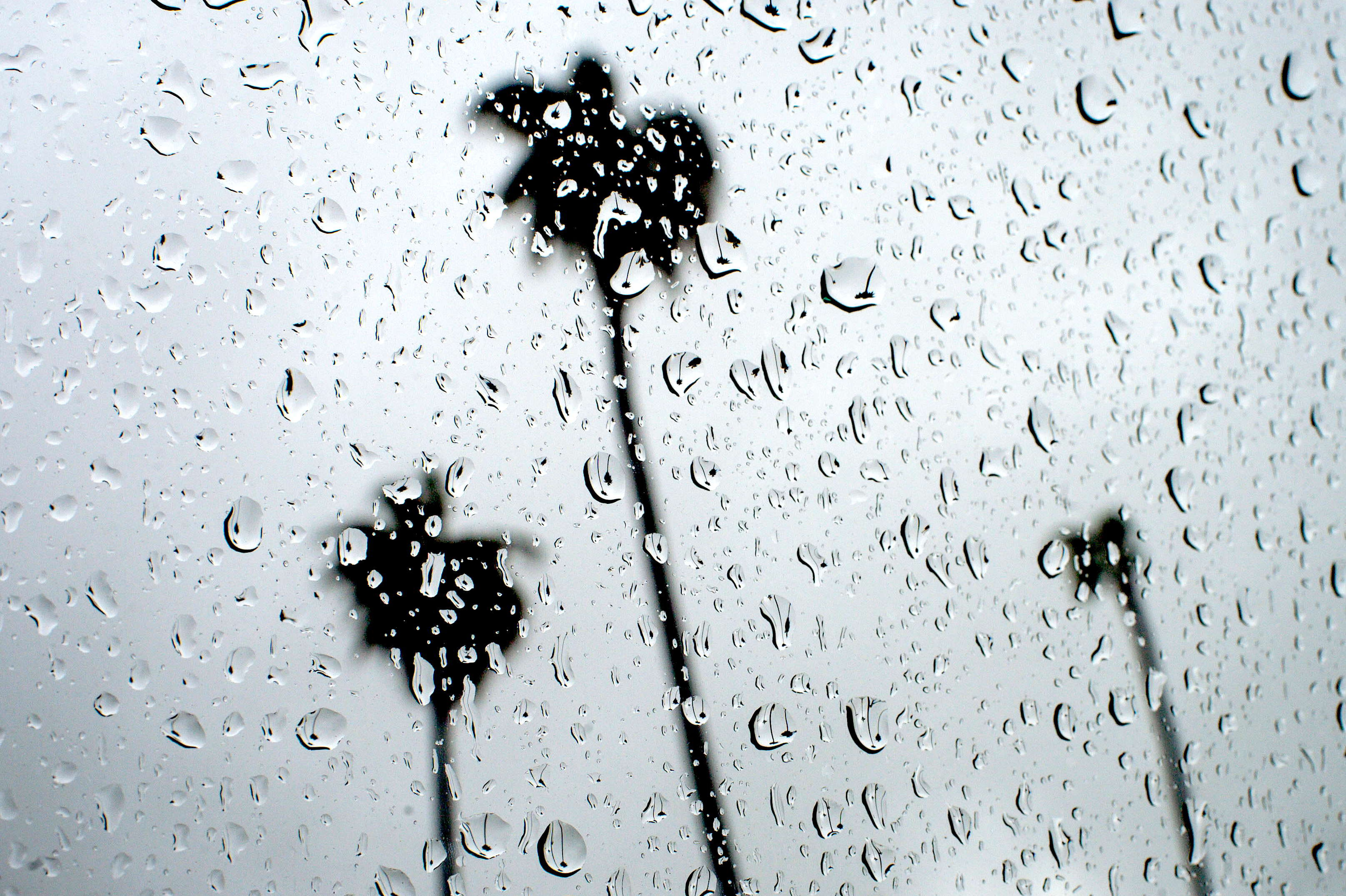 Rain And Rainfall Records Keep Falling In Southern California Daily News