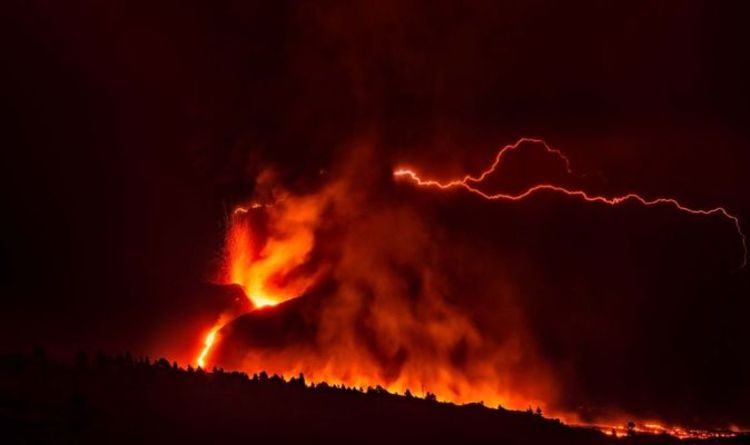 Dogs trapped by the La Palma volcano lava await rescue via drones – '15 days' without food