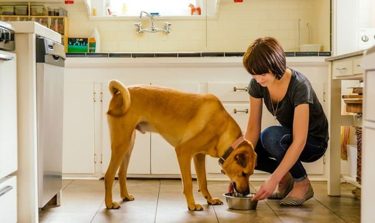 UK dog owners could face jail or £20k fine if they make their dog eat vegetarian diet