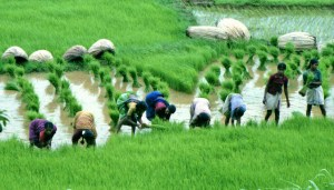 How To Start Farming Business And Make Money From It In Nigeria