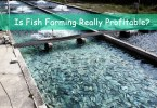 How To Start Fish Farming In Nigeria