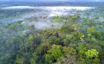 Facebook to act on illegal sale of Amazon rainforest