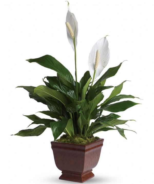 10 Air Purifying Plants For Your Home Amp Office
