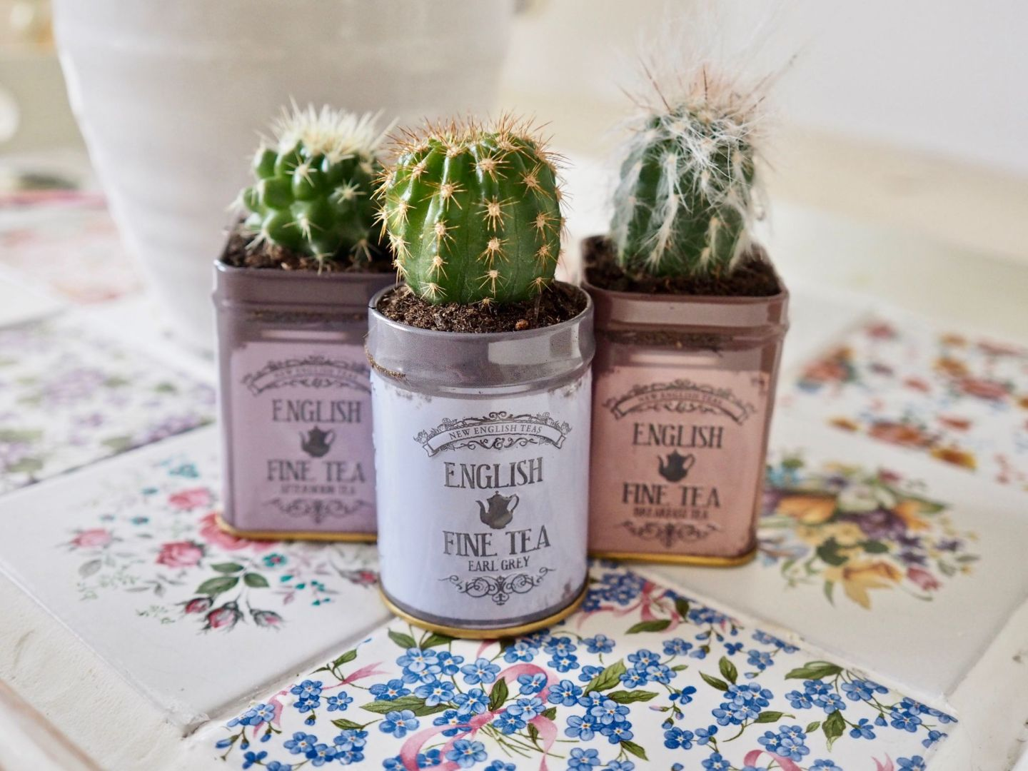 Mother's Day DIY Gift Ideas, Succulent gift DIY