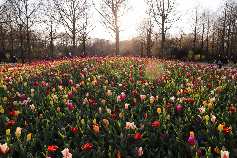 The Keukenhof gardens