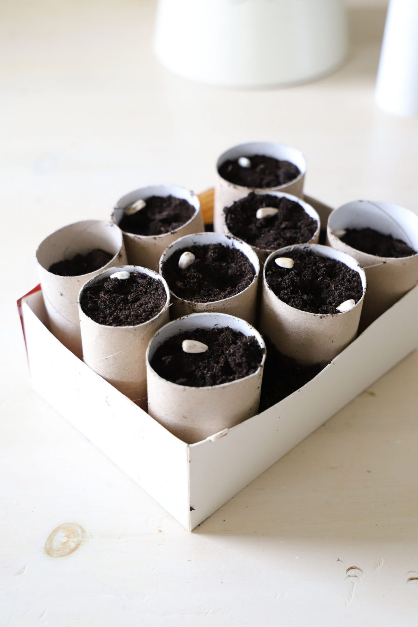 DIY Toilet rolls seed starters