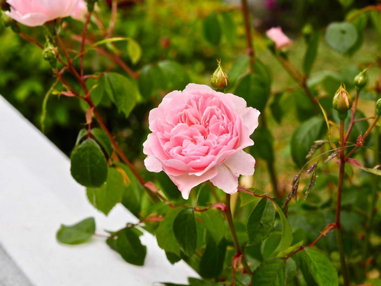 10 garden DIYs to brighten your outdoor space