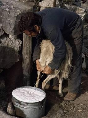 Παστεριωμένο vs Νωπό γάλα
