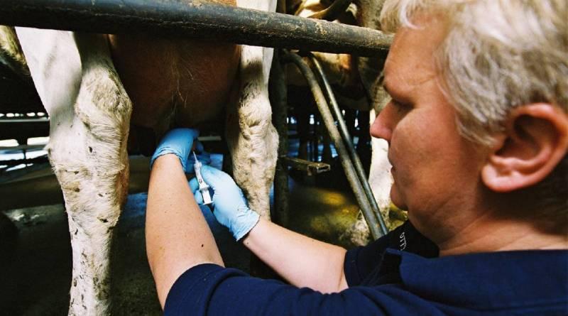 Πώς τα αντιβιοτικά στο γάλα μπορούν να καταστρέψουν την παραγωγή των γαλακτοκομικών μας!