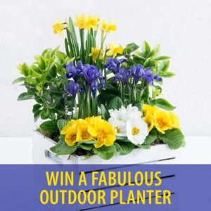 Win Outdoor Planter