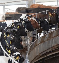 4 modern milking parlor designs [ 1200 x 1200 Pixel ]