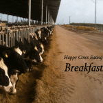 Keeping Cows Comfortable is a Dairies Number 1 Priority!