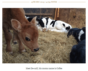 De-calf on Tumblr