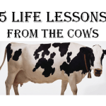 5 Unique Life lessons from the Cows