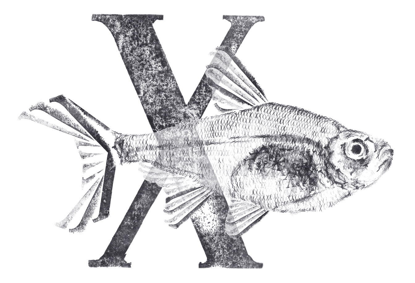 X For X Ray Fish