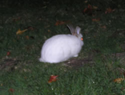 is that what i think it is?  a bunny in the front yard?