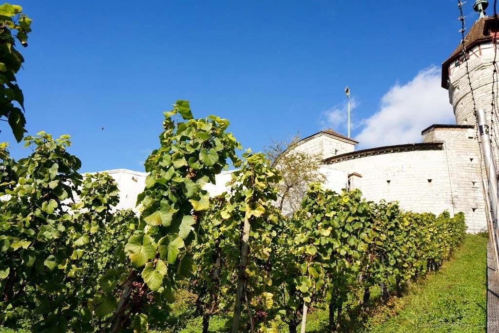 Schaffhausen, 瑞士城市, 瑞士景點, 沙夫豪森, 圓形廣場, 瑞士小鎮, 瑞士自助, 瑞士火車, 瑞士自駕, 梅諾城堡, 米諾要塞
