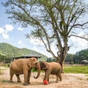 大象自然公園, 大象公園, elephant nature park, 清邁景點, 清邁自由行, 清邁自助, 大象保育