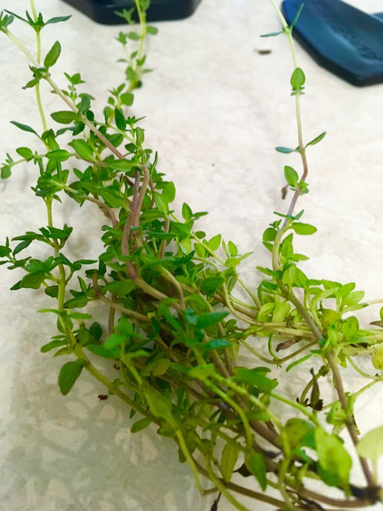百里香、羅勒、迷迭香 3種常用草本的食療功效