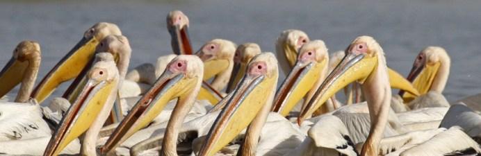 parc des oiseaux7