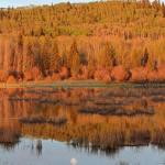 moon set, autumn leaves, reflecting moon, duck pond, Cowboy Trail
