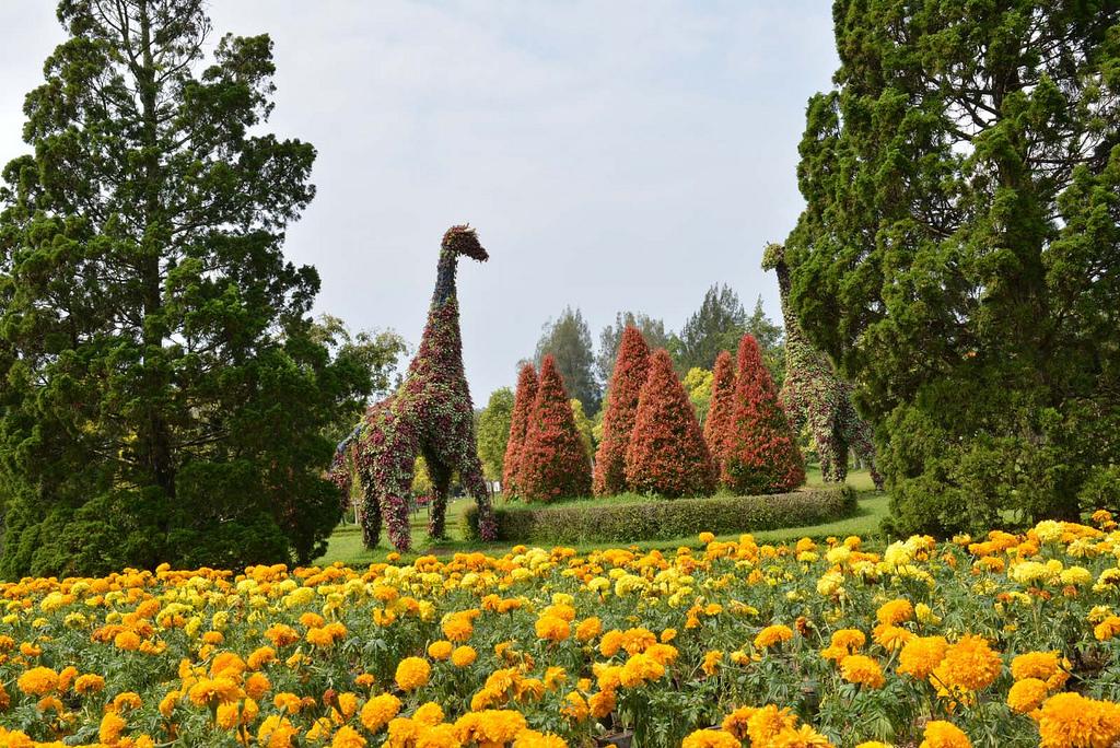 Rute dan Lokasi Taman Bunga Nusantara Tempat Wisata Di