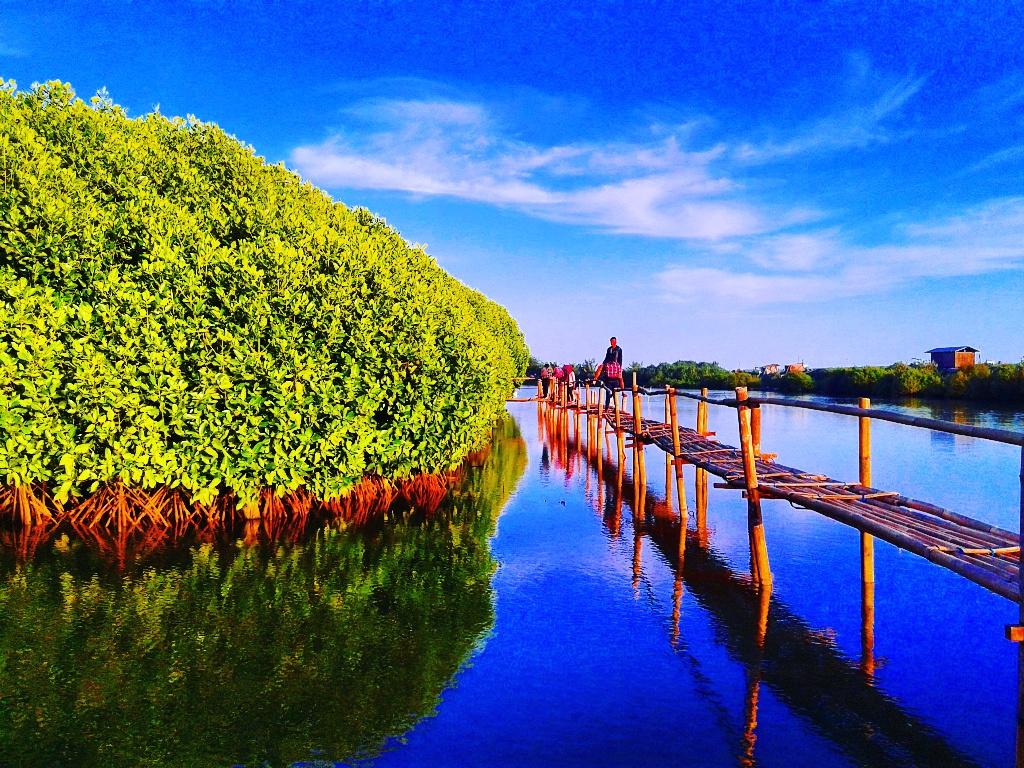 Lokasi dan Tiket Masuk Hutan Mangrove Pantai Congot Kulon