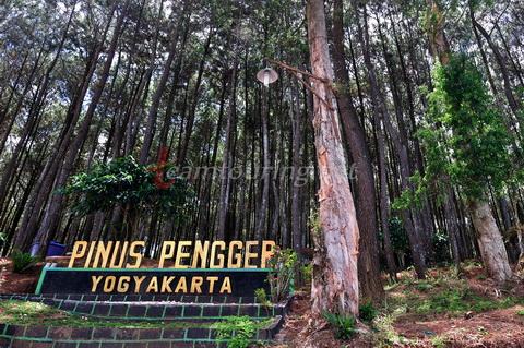 Lokasi Dan Rute Menuju Hutan Pinus Pengger Jogja Serunya