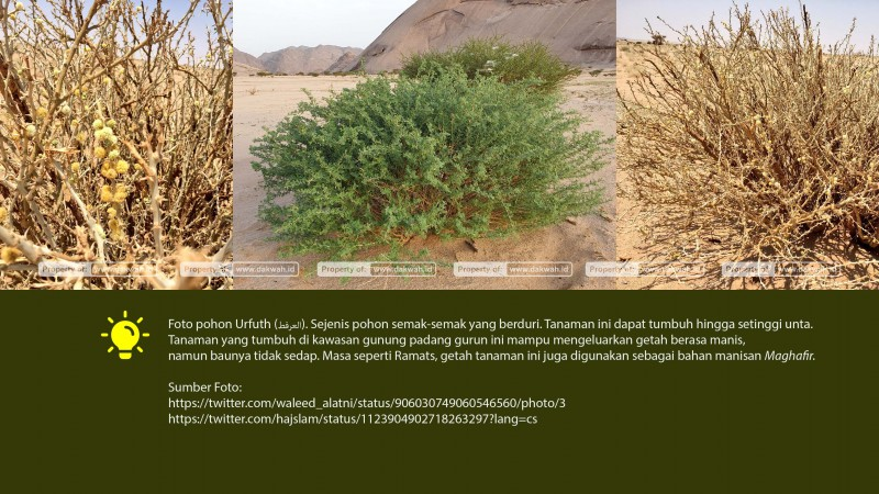 hikmah surat at-tahrim ayat 4 tanaman urfuth-dakwah.id