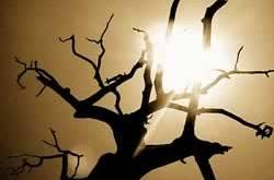 pohon-meranggas