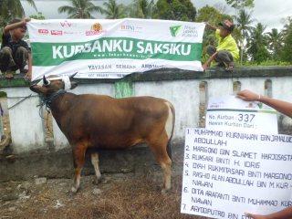 Sapi kurban yang akan dipotong di Yayasan Semang, Ambon.