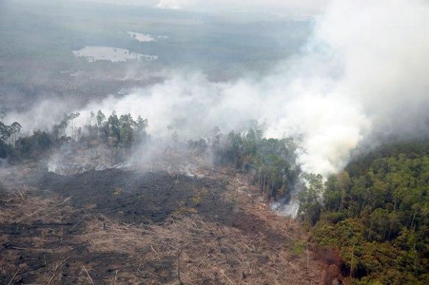 Ilustrasi. Kepulan asap dari hutan terbakar. (Antara/ Satgas Bencana Asap Riau)