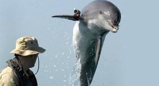 us-dolphins-black-sea.si