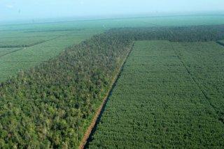 Area hutan tanaman industri terlihat dari udara di Kabupaten Pelalawan, Riau.  (kaskus.co.id)