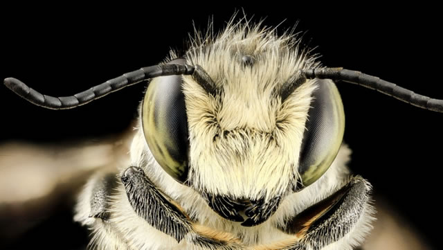 lebah-05